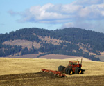 Wheat Farming in Eastern Washington